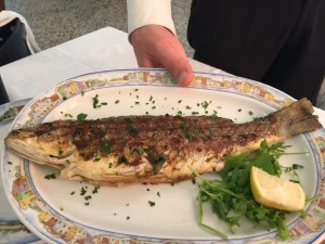 Grilled branzino (fish)