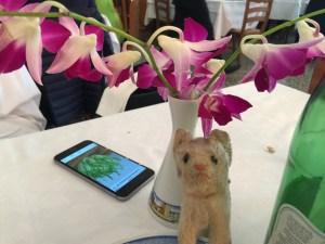 Frankie always a fan of orchids