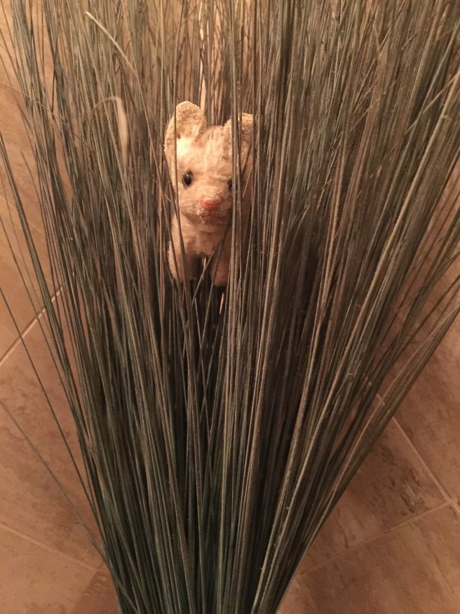 Frankie explored the bathroom decoration