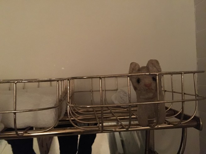 Frankie played in the towel basket in the bathroom