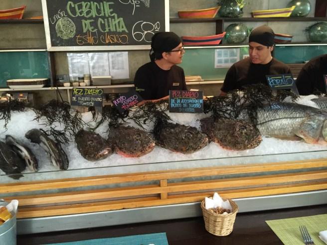 lots of fresh fish