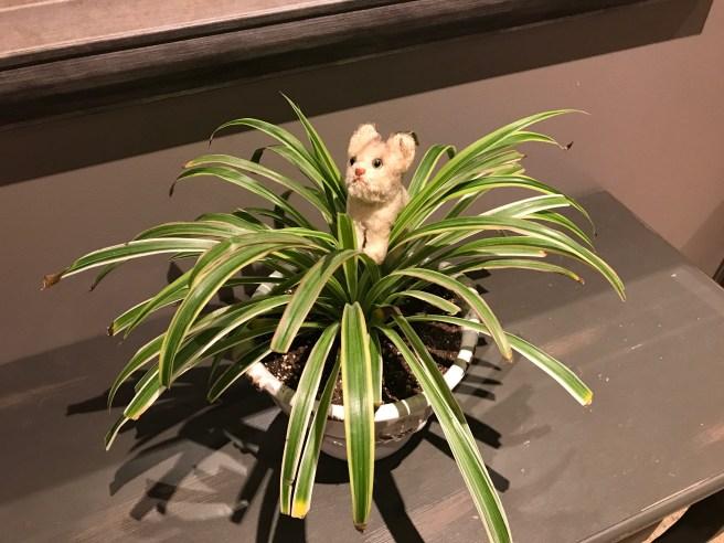 Frankie found a plant