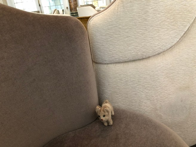 Frankie enjoyed the plush seating
