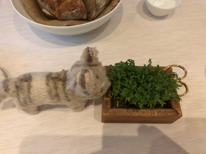 Frankie sniffed the herbs