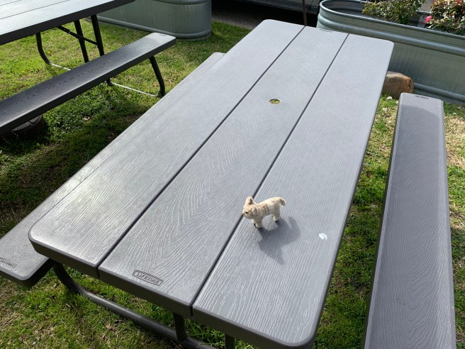 Frankie played on the outdoor tables