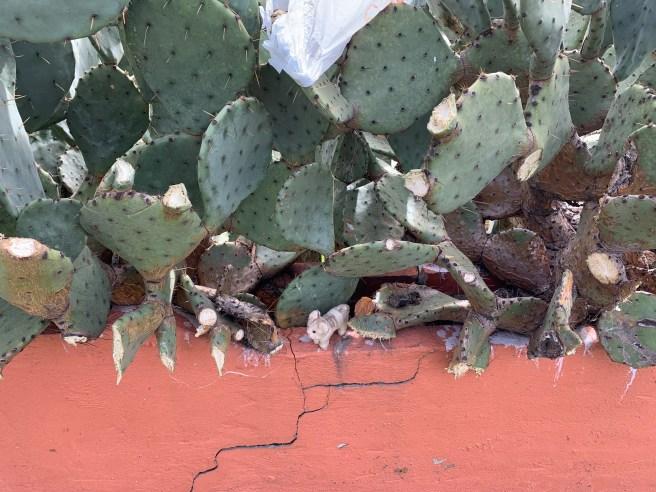 Frankie was careful around the cactus