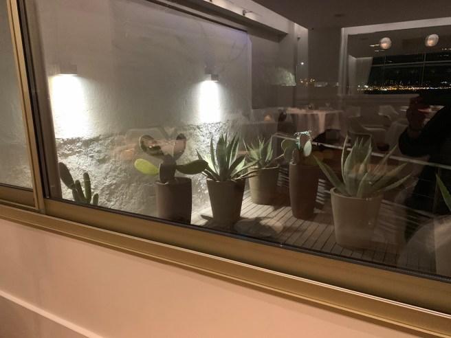 cactus garden outside