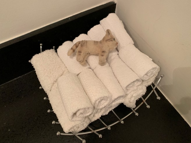 Frankie lounged on the hand towels