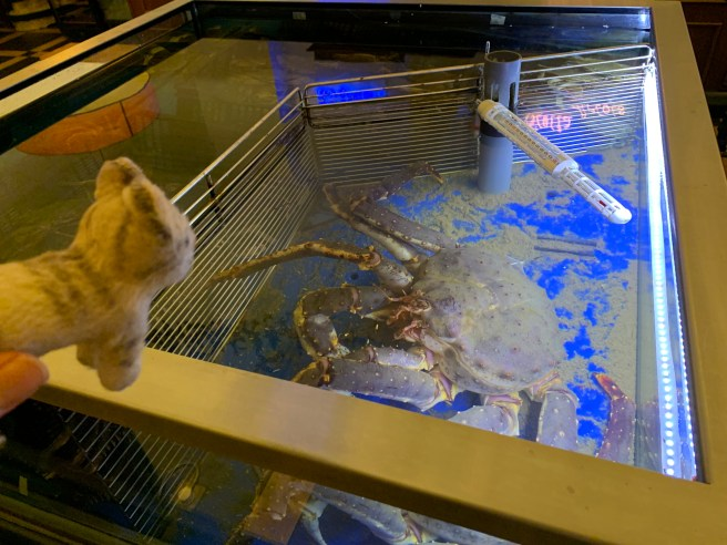 Frankie studied the large crab