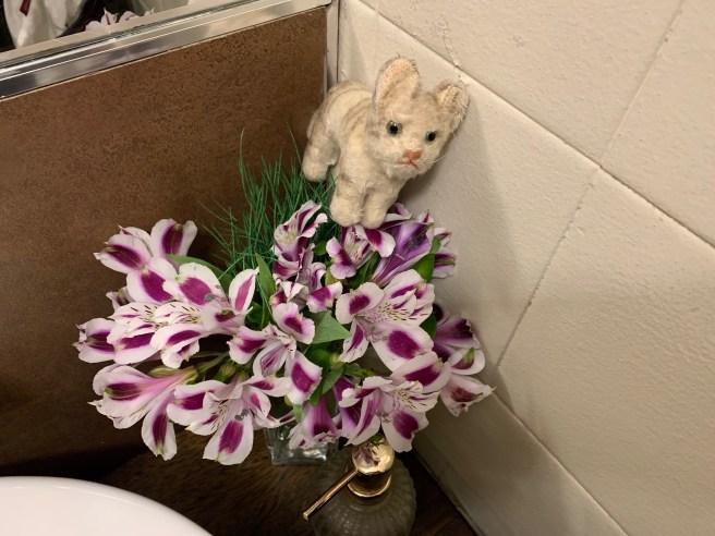 Frankei found flowers