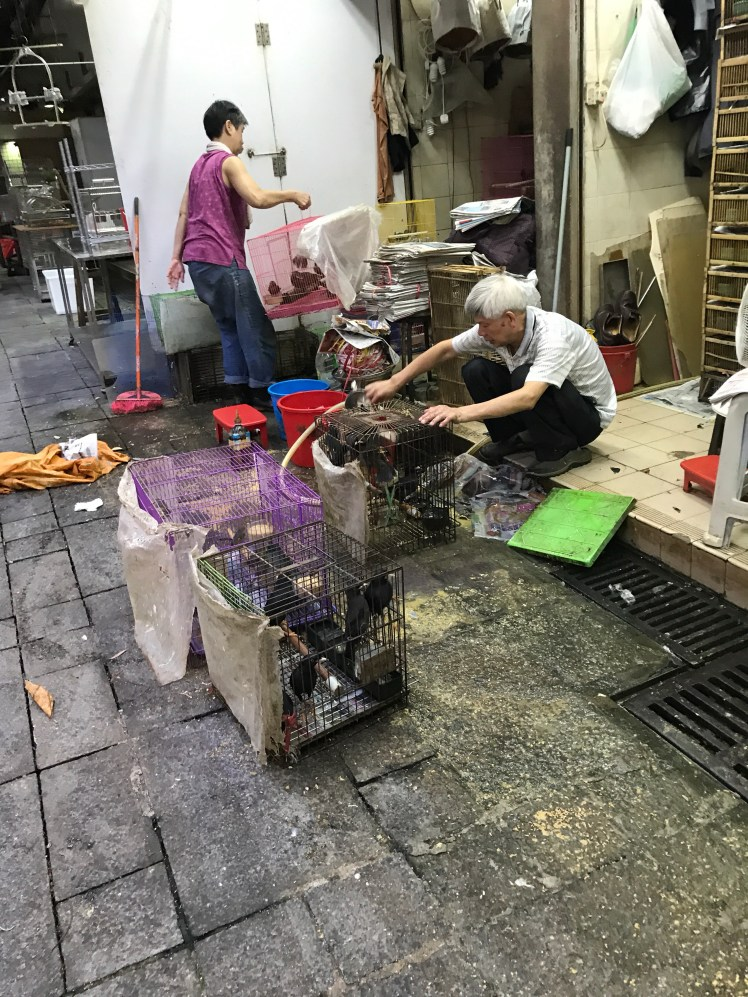 Bird seller showering the birds at Yuen Po Bird Garden