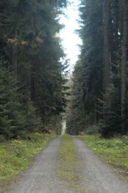 Black Forest 015