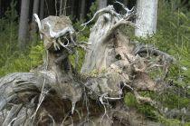 Black Forest 017