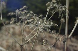 Black Forest 043