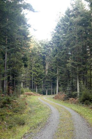 Black Forest 047