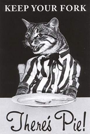 pieathalon cat