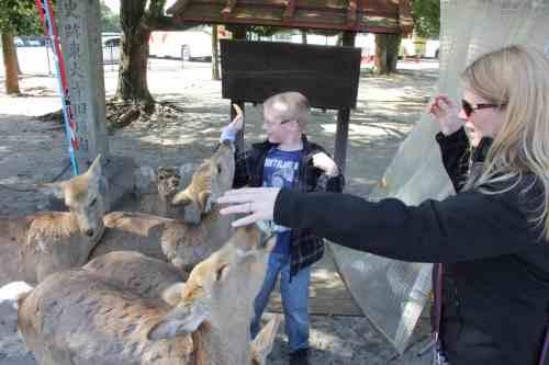 A person feeding a deer
