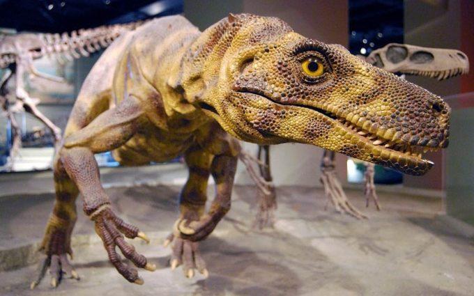 The oldest known dinosaurs – Herrerasaurus, Staurikosaurus ...
