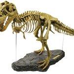Geoworld 23210995 - T-Rex 3D Skelett 54 Teile circa 71 cm