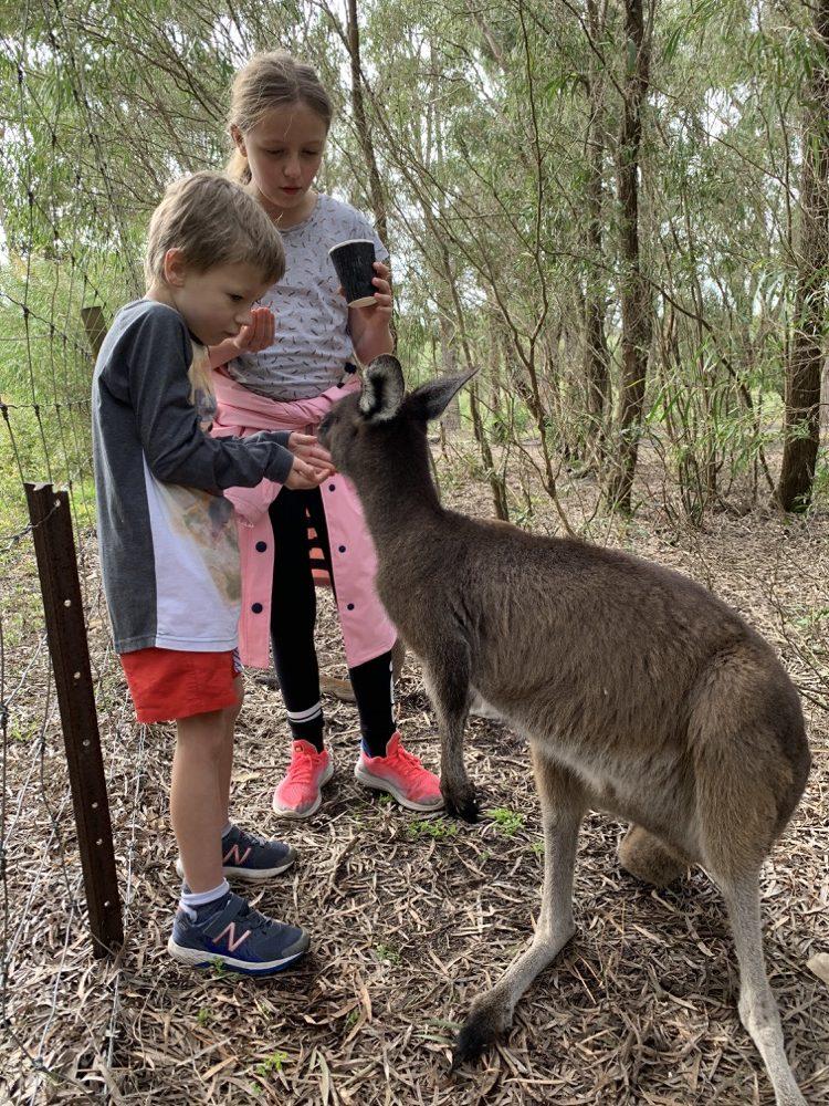 dinosaur-world-kangaroo-park-9