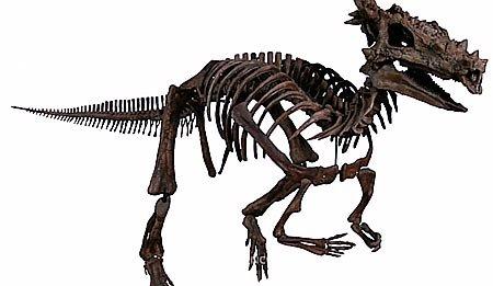 Пахицефалозавр: открытие