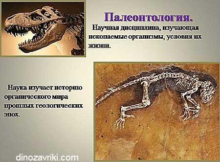 Наука о динозаврах: палеонтология, научная дисциплина, изучающая ископаемые организмы, условия их жизни