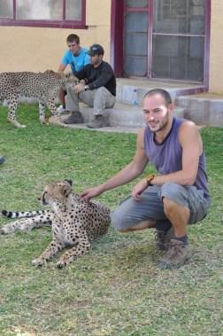 cheetah-park-nambia-42