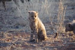 cheetah-park-nambia-446