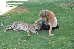 cheetah-park-nambia-56
