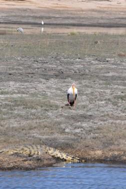 chobe-national-park-zimbabwe-340