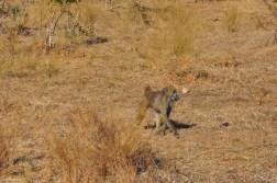 chobe-national-park-zimbabwe-513
