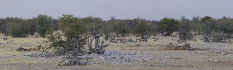 etosha-20-namibia