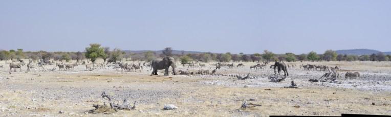 etosha-3-namibia