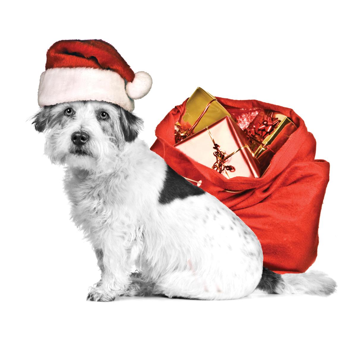 Animal Magic Christmas Collection Dipingo Design