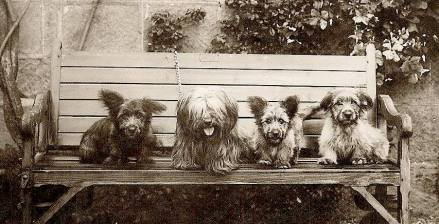 hairy puddings on a bench