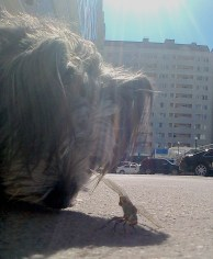 nellie meets fly