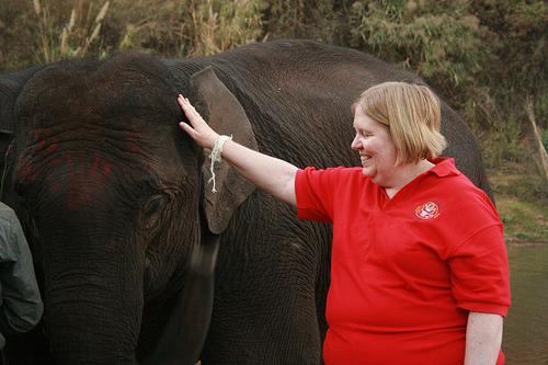ANIMALS_Amb Stewart during elephant festival