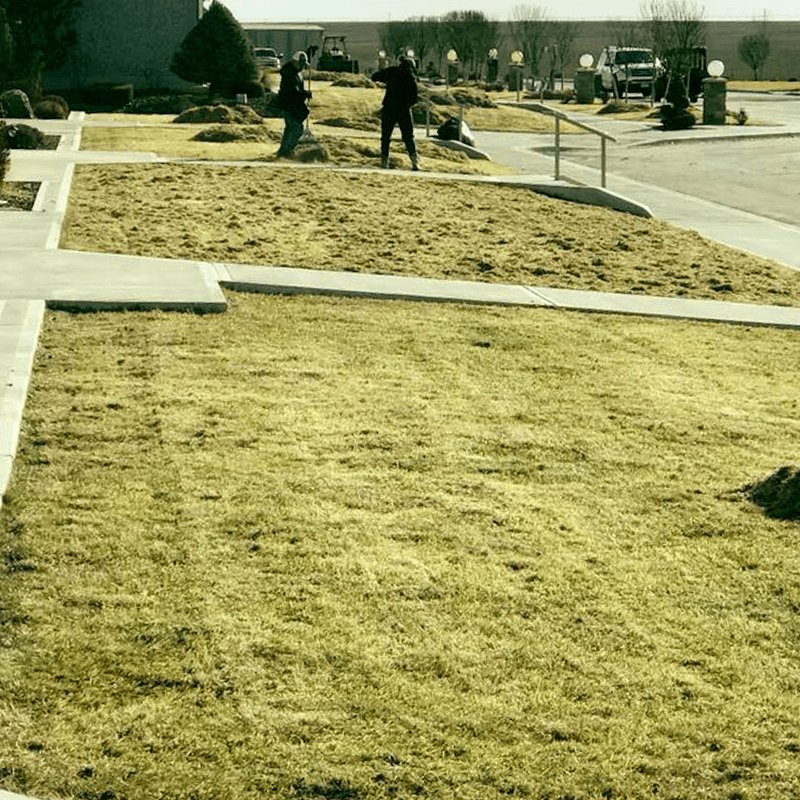 lawn and sod