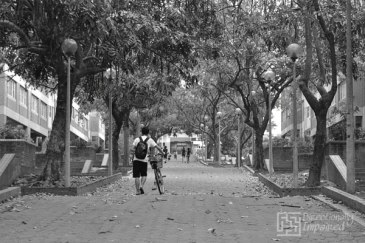 Path along the student dormitories