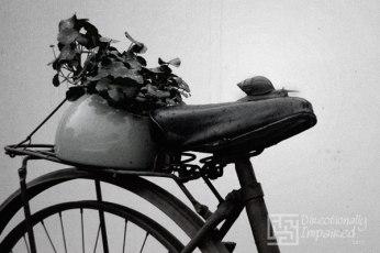 Snail riding an ornamental bike