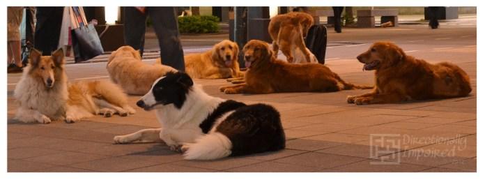 Dog Convention
