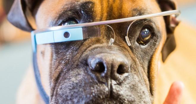 Cyber Pets: tecnología para mascotas