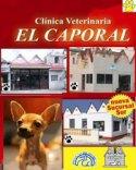 elcaporal3