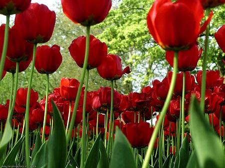 El origen de los colores de las flores