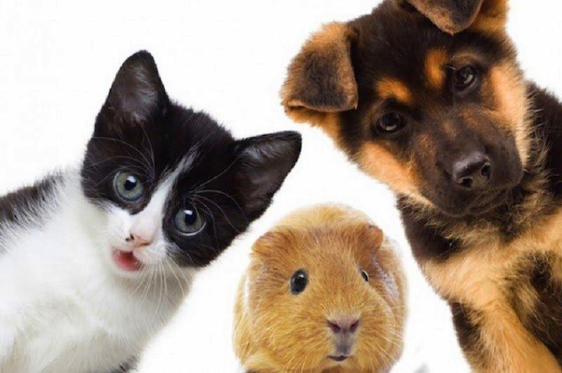 Ventajas de tener un animal de compañía