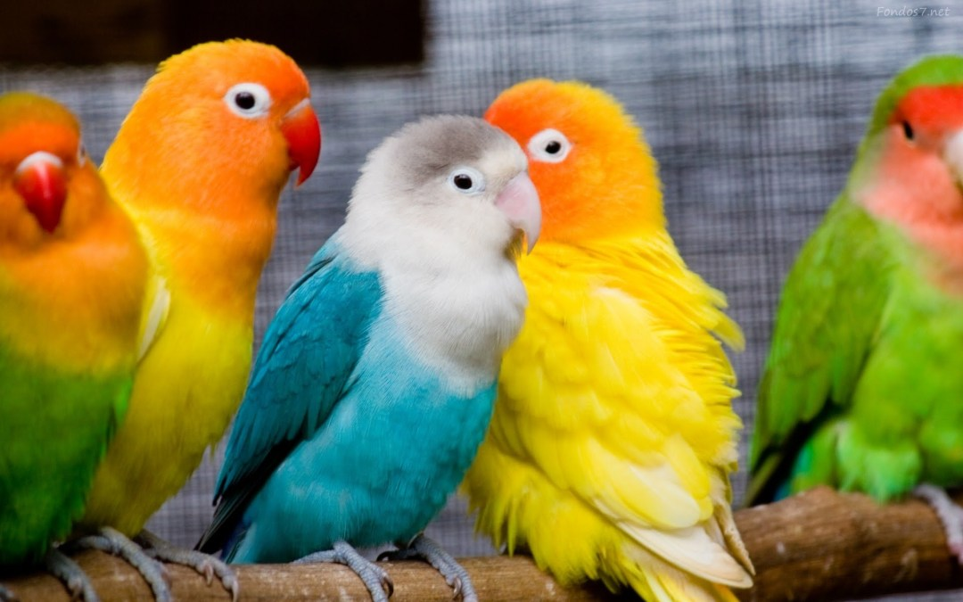 Ventajas de tener un ave como mascota