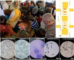 Foldscope-what you see