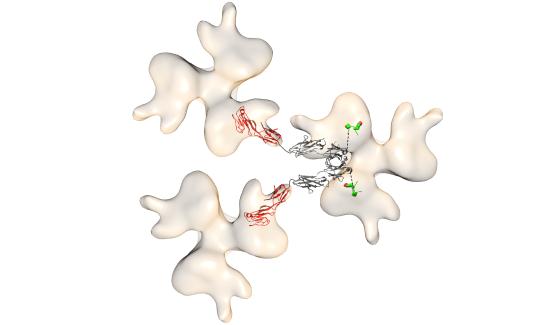 Decoy protein