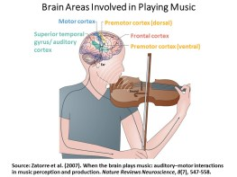 Brain Arias Involved in Playing Music