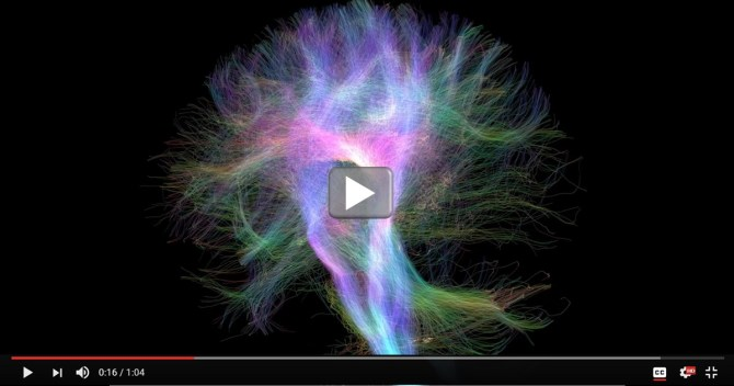 cool videos starring the wiring diagram of the human brain